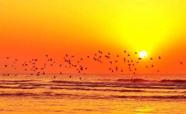птицы над морем