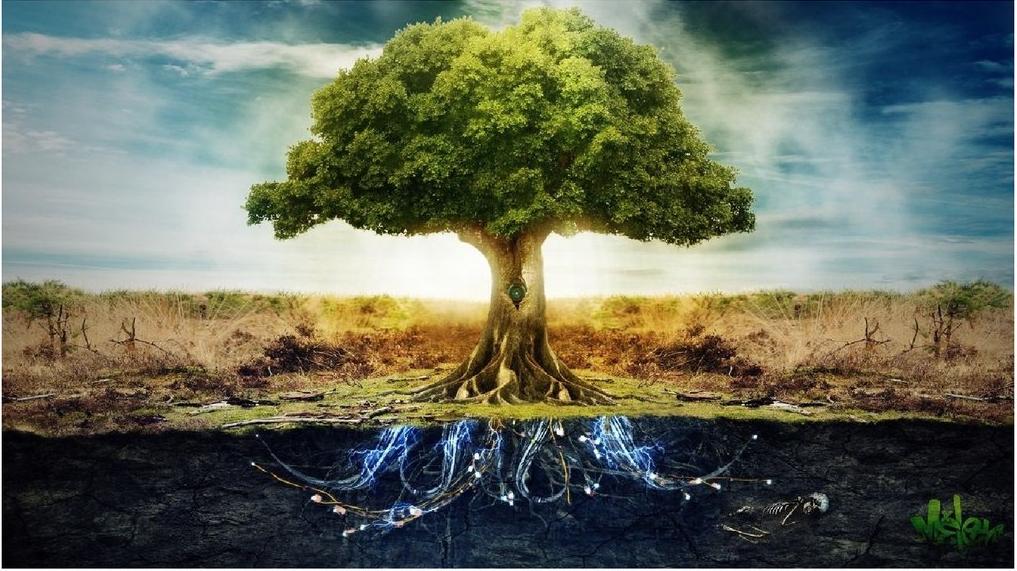 дерево испр